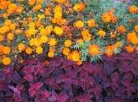 Flowerspeacemonument